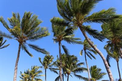 palms-344666_1280